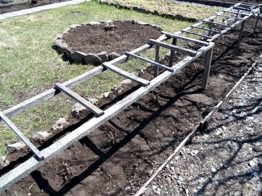 выращивание георгин, посадка и уход - установка ограждения