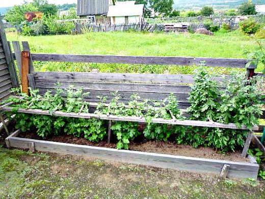 выращивание хризантем, посадка и уход - ограждение для цветов