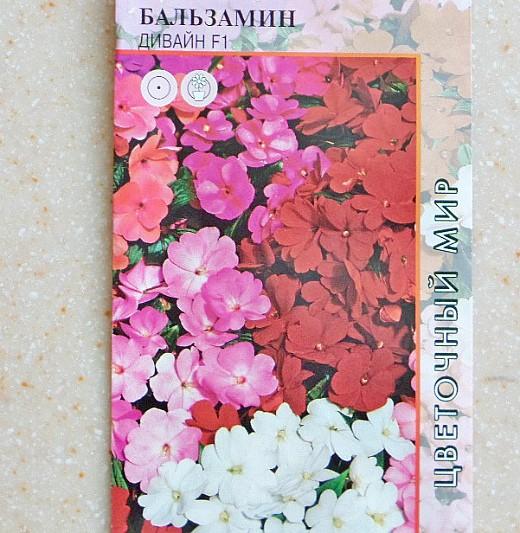 Бальзамин садовый, посадка и выращивание