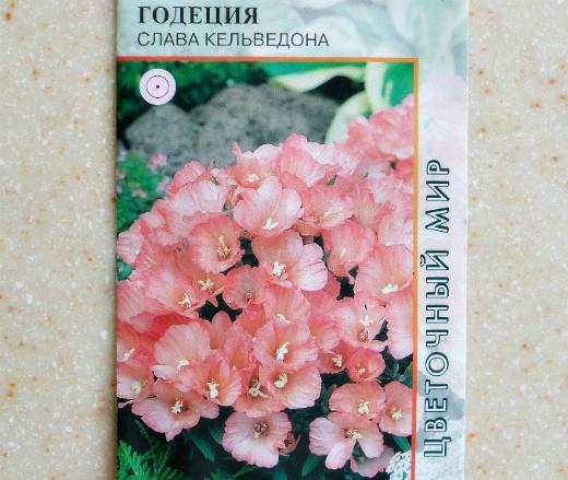 Выращивание цветов годеции