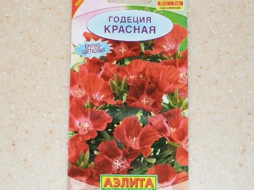выращивание цветов годеции 3