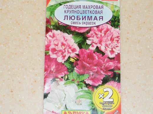 выращивание цветов годеции 4