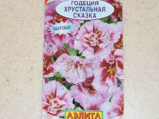выращивание цветов годеции 5