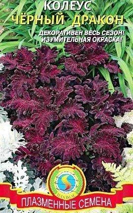 колеус, посадка и выращивание - семена сорт черный дракон