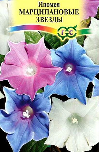 ипомея, посадка и уход - семена сорт марципановые звезды