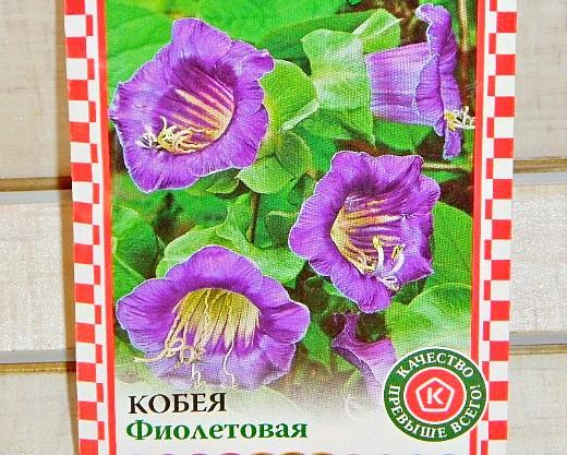 кобея лазающая, посадка и уход - семена, фиолетовая