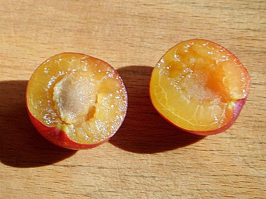 этапы жизни плодовых деревьев 1-1