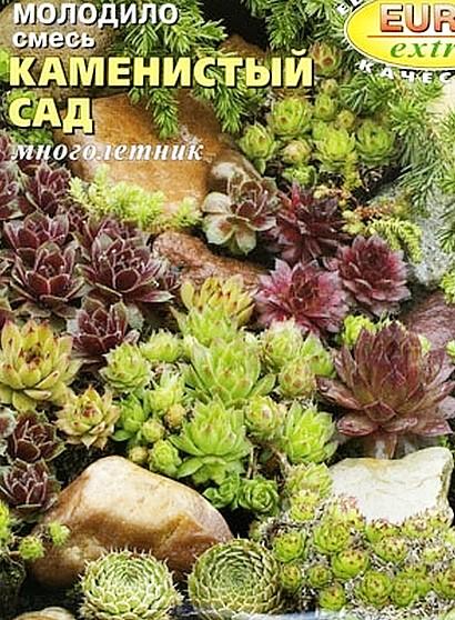 цветы молодило, выращивание и размножение - семена сорт каменистый сад