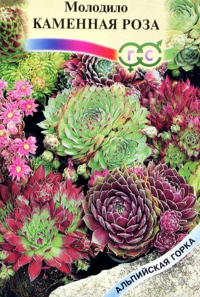 цветы молодило, выращивание и размножение - семена сорт каменная роза