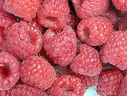лучшие сорта малины ранние, средние, поздние и ремонтантные - бирюсинка