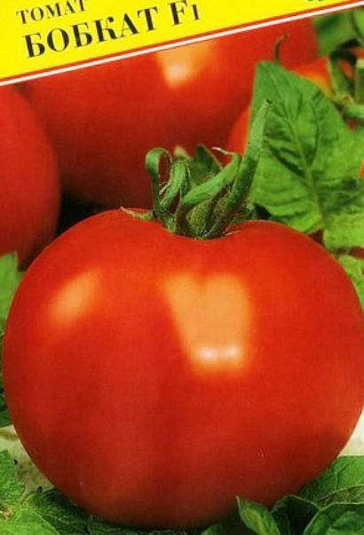 лучшие сорта томатов для открытого грунта - бобкат f1