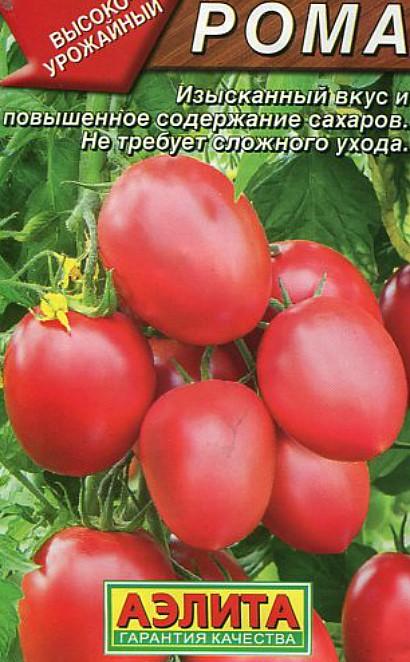 лучшие сорта томатов устойчивых к заболеваниям и неблагоприятным погодным условиям - рома