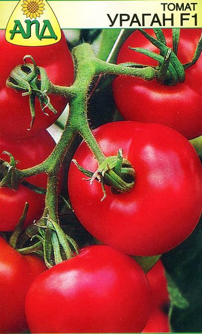 лучшие сорта томатов для теплиц - ураган f1