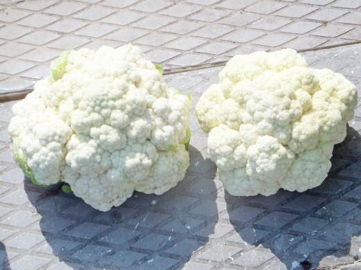 болезни и вредители цветной капусты 3