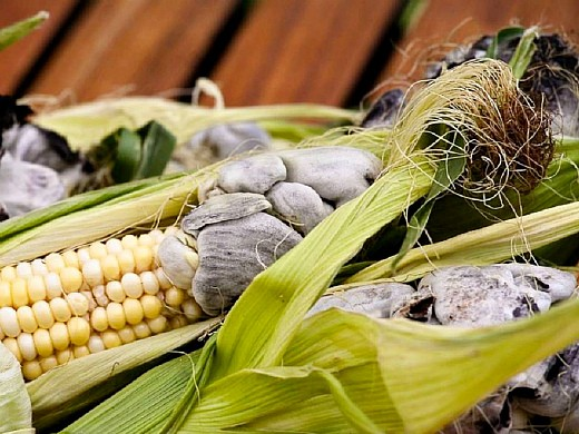 болезни кукурузы пузырчатая головня