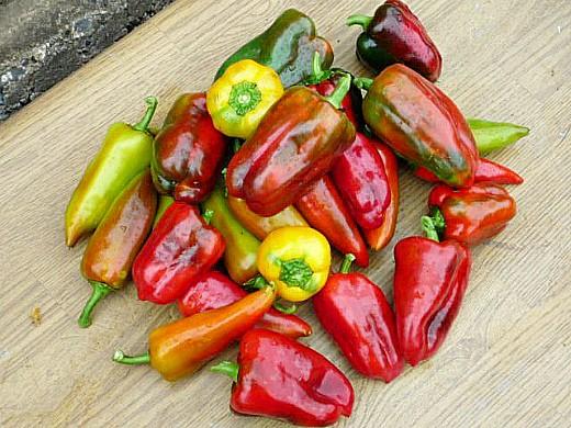 урожай перца разного цвета