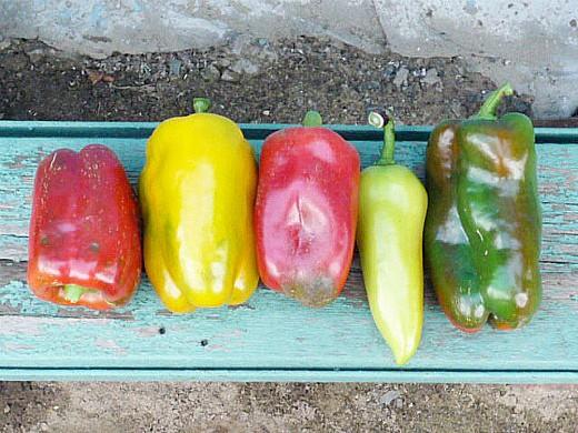разноцветные сладкие болгарские перцы