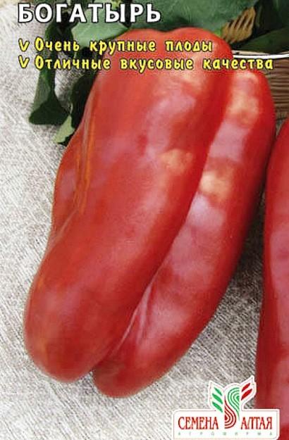 лучшие сорта перцев для теплиц - богатырь