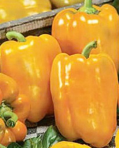 лучшие сорта толстостенных перцев с описанием и фото - эней