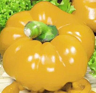 лучшие сорта толстостенных перцев с описанием и фото - золотое руно