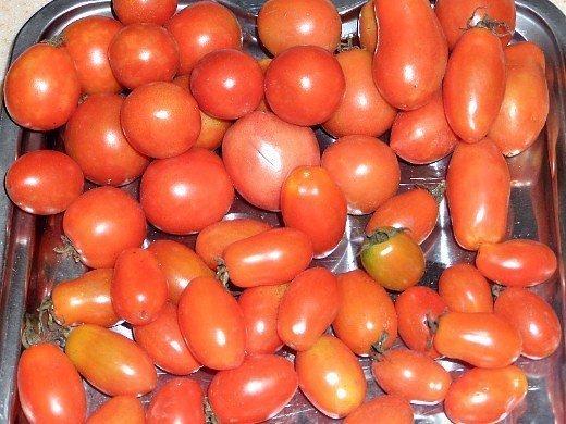 особенности выращивания томатов помидоров - спелые овощи