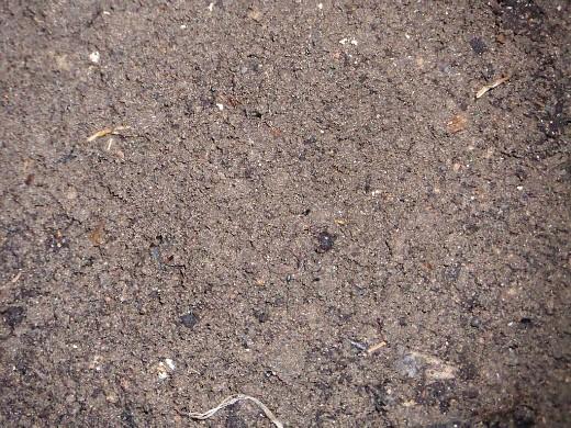 чем подкармливать растения - удобрения, компост