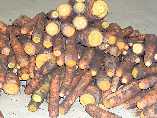хранение корнеплодов зимой - морковь