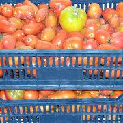 хранение овощей зимой - помидоры 1