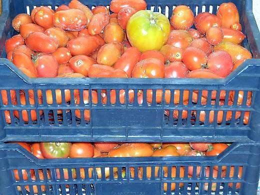 хранение овощей зимой - помидоры