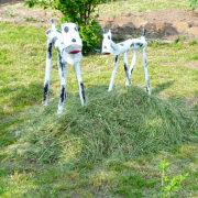 какой выбрать газон сеянный или рулонный 3