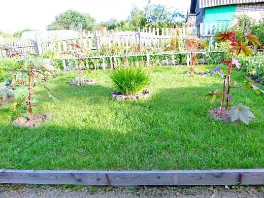 какой выбрать газон сеянный или рулонный 4