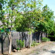 календарь работ в саду и огороде летом 1