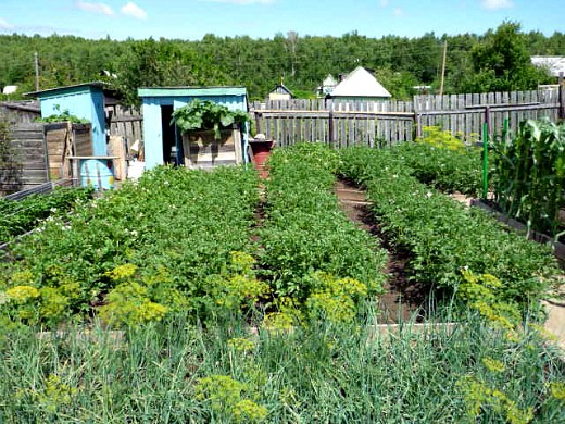 календарь работ в саду и огороде летом 10