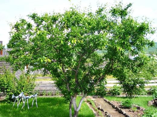 календарь работ в саду и огороде летом 11