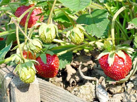 календарь работ в саду и огороде летом 2