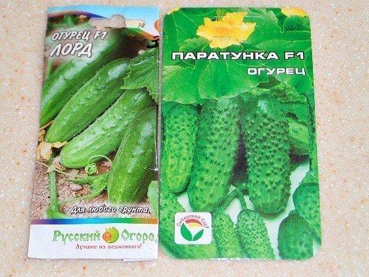посадка огурцов семенами и рассадой в открытом грунте, теплице - сорта f1 лорд, паратунка