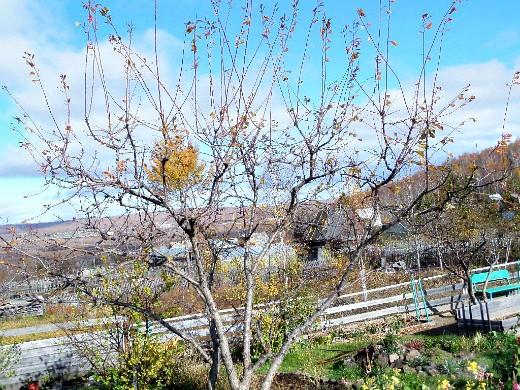 уход за деревьями и кустарниками осенью 1-2