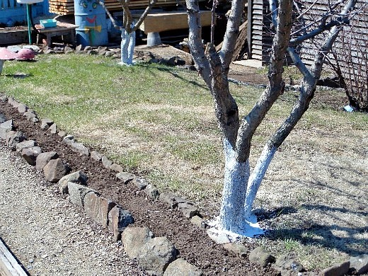 уход за деревьями и кустарниками осенью 1-3