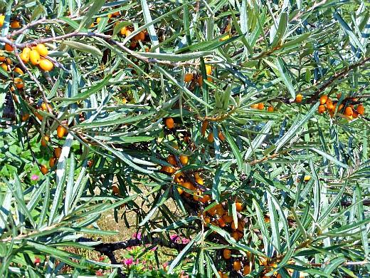 уход за деревьями и кустарниками осенью 1-4