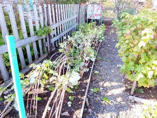 уход за деревьями и кустарниками осенью 1-5