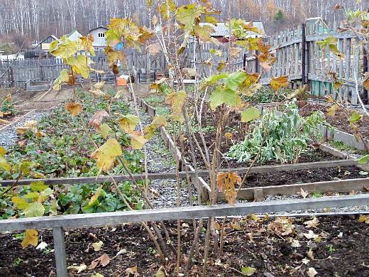 уход за деревьями и кустарниками осенью 1-7