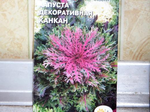 декоративная капуста, выращивание и уход - семена сорт канкан