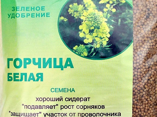 какие сидераты сеять осенью и весной - горчица белая