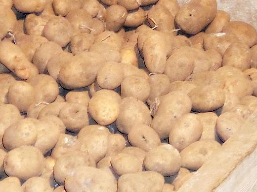 подготовка погреба (подвала) к хранению - картошка на деревянном настиле