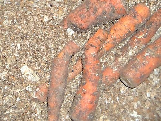 подготовка погреба (подвала) к хранению - морковь проложенная опилками