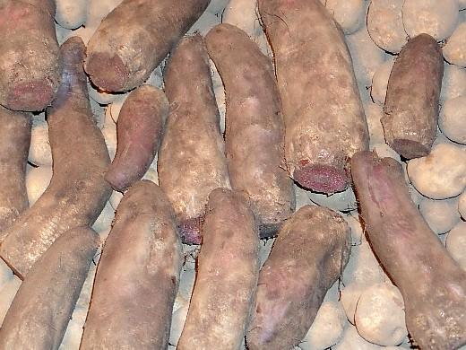 подготовка погреба (подвала) к хранению - свекла на картофеле