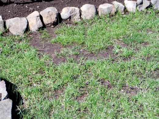 посадка газона весной, осенью 2