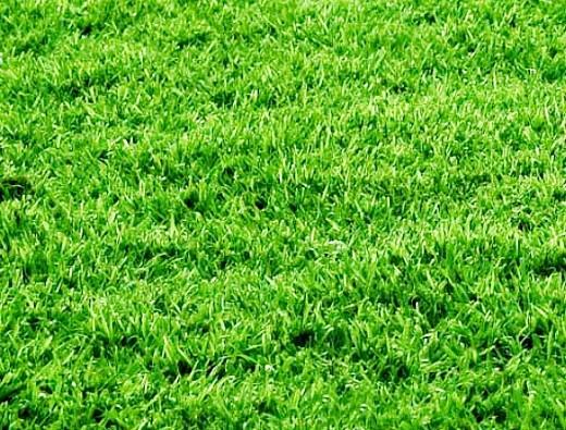 посадка газона весной, осенью
