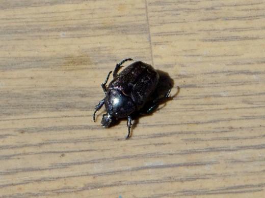 как избавиться от личинок майского жука 1-4