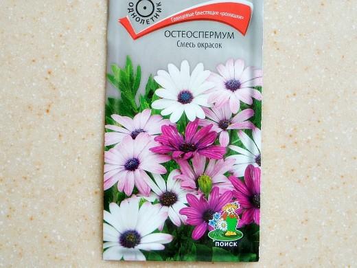 остеоспермум, выращивание из семян - смесь окрасок